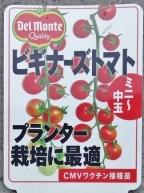 ビギナーズトマト