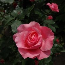 6月29日 コラーユ・ジュレ