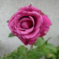 6月30日 ポルトゥス・カレ・フォーエバー