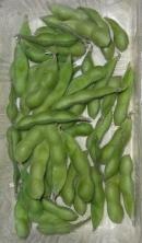 こんな枝豆が出来ました。