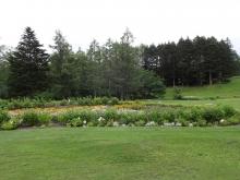 16:01 元ゴルフ場のコース!って感じたっぷりな中に花がありました。