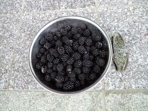 20140725_ブラックベリー2・収穫