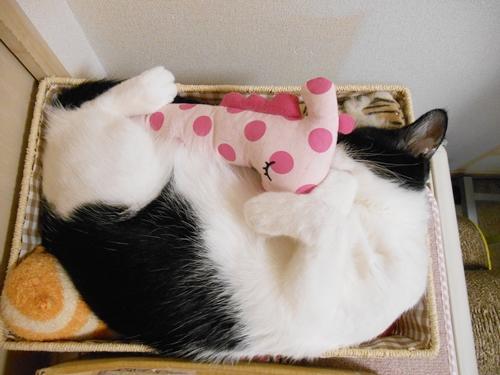 おもちゃ箱で寝るぼく