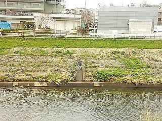 aobayakusho1.jpg