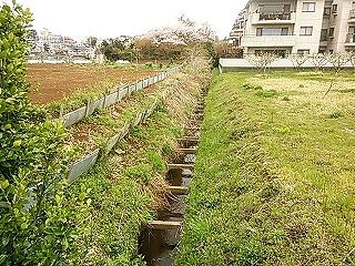 ichi-shimo2.jpg