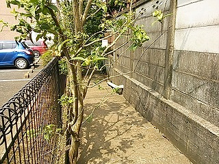 shimosaku423-5.jpg