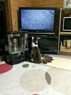 テレビっ子(笑)