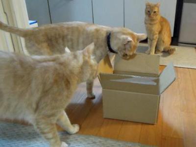 やっぱり箱好き♪