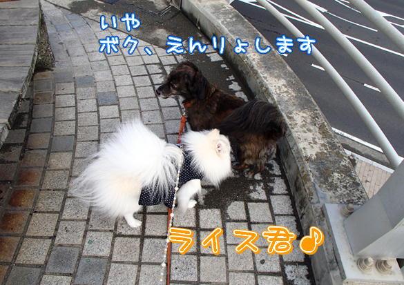 10_20140911231008c1f.jpg