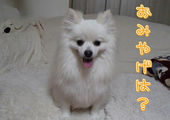 12_20140618095829dad.jpg