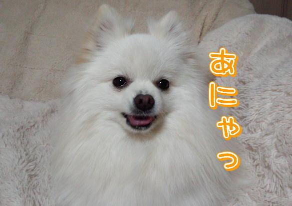 15_20140318203237d6e.jpg