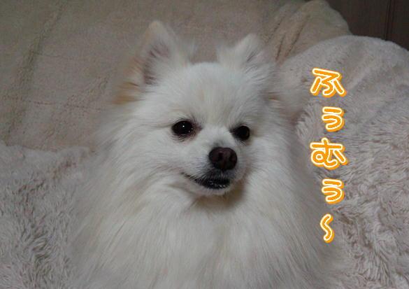 17_2014031820323631a.jpg