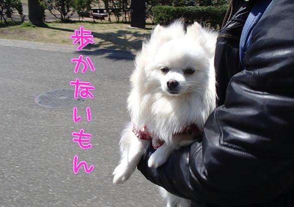 1_2014032808511017d.jpg