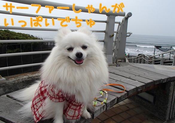 4_20140505082118ed7.jpg