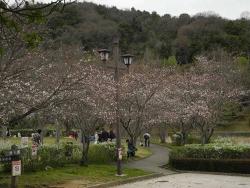 鏡山公園20140331-1