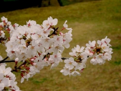 鏡山公園20140331-2