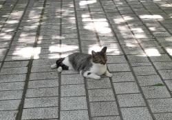 鏡山公園20140531-04