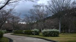 鏡山公園でアコーディオン20140330-1