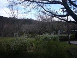 鏡山公園でアコーディオン20140330-2
