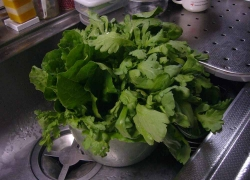 野菜の再生20140530-1