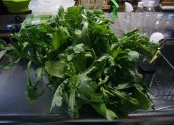 野菜の再生20140530-2