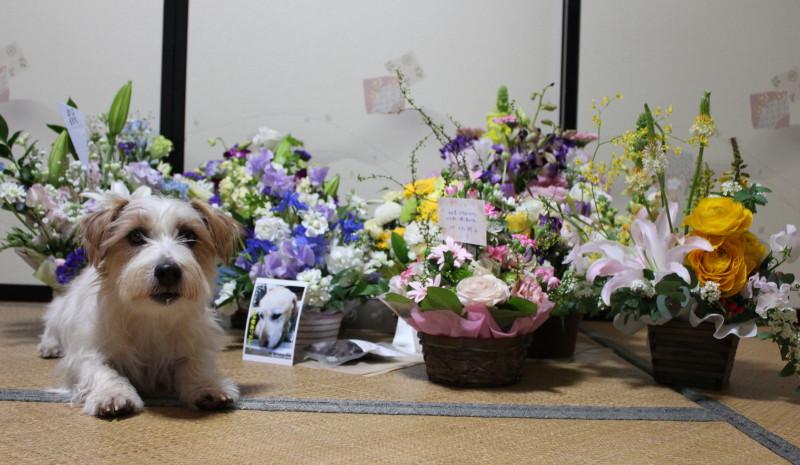 花に囲まれてIMG_6539_1