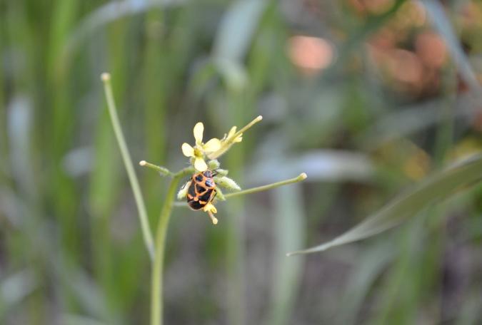 黄色い花とカメムシ