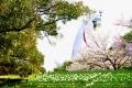 チューリップ園から太陽の塔と桜