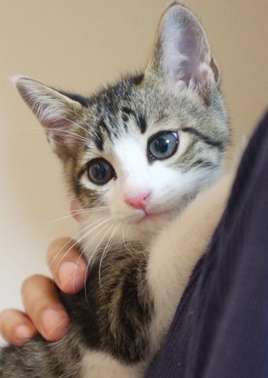 目が大きく仔猫のかわいらしさが胸キュンです