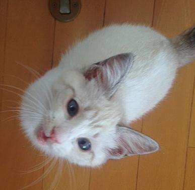 人間にも猫にも「遊んでー」と寄ってくるスリゴロさん