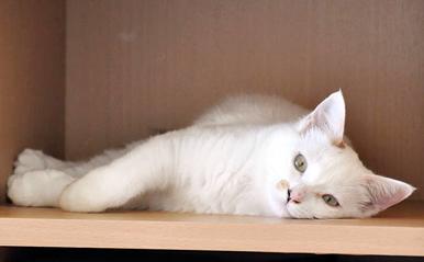 人間は好きだけど猫はちょっと…ねー 気ままな一人が一番よ