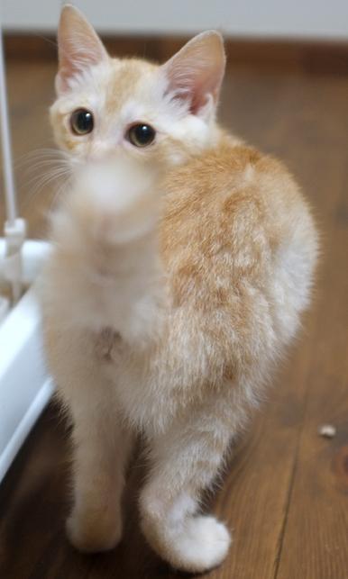 遊ぶときは子猫ならではの動きをします
