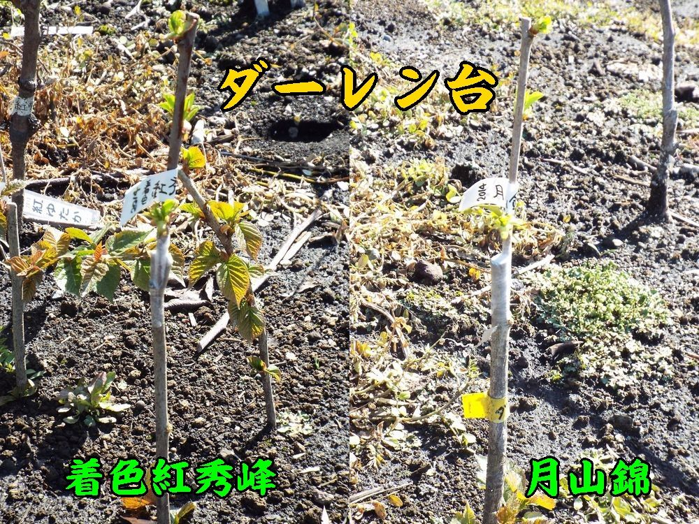1D_tyakubeniGas0405c1.jpg