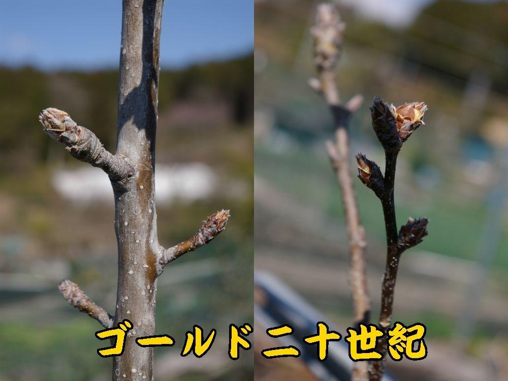 1G20seiki0321c1.jpg