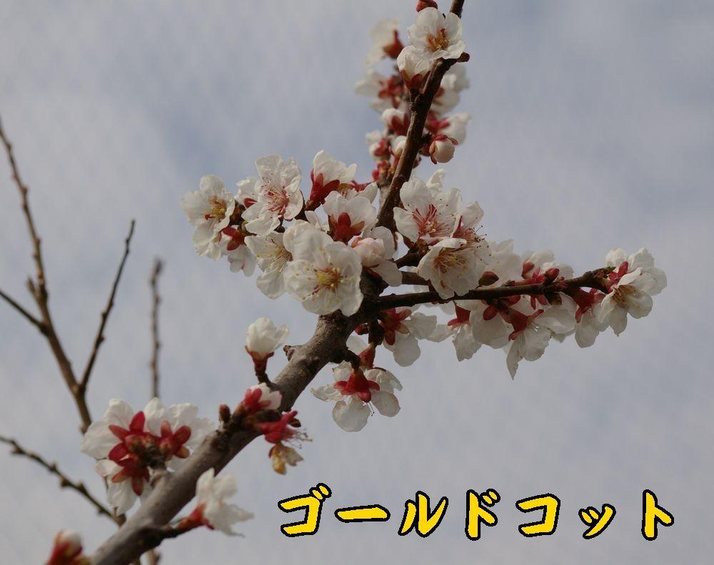 1Gcot0319c1.jpg