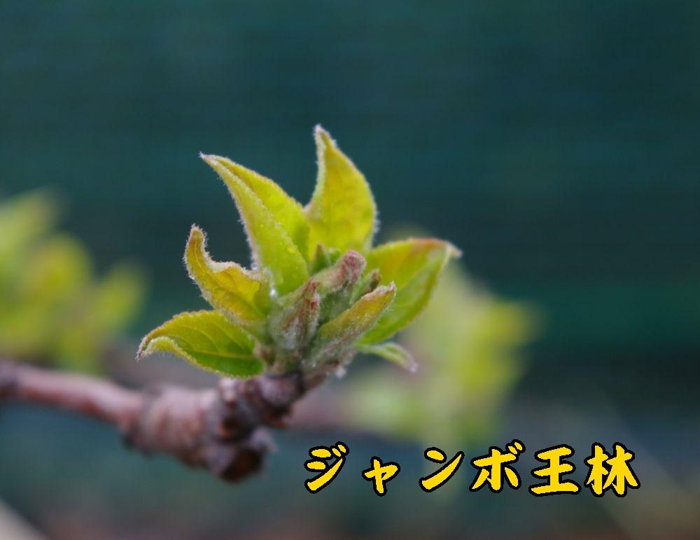 1Jorin0327c1.jpg