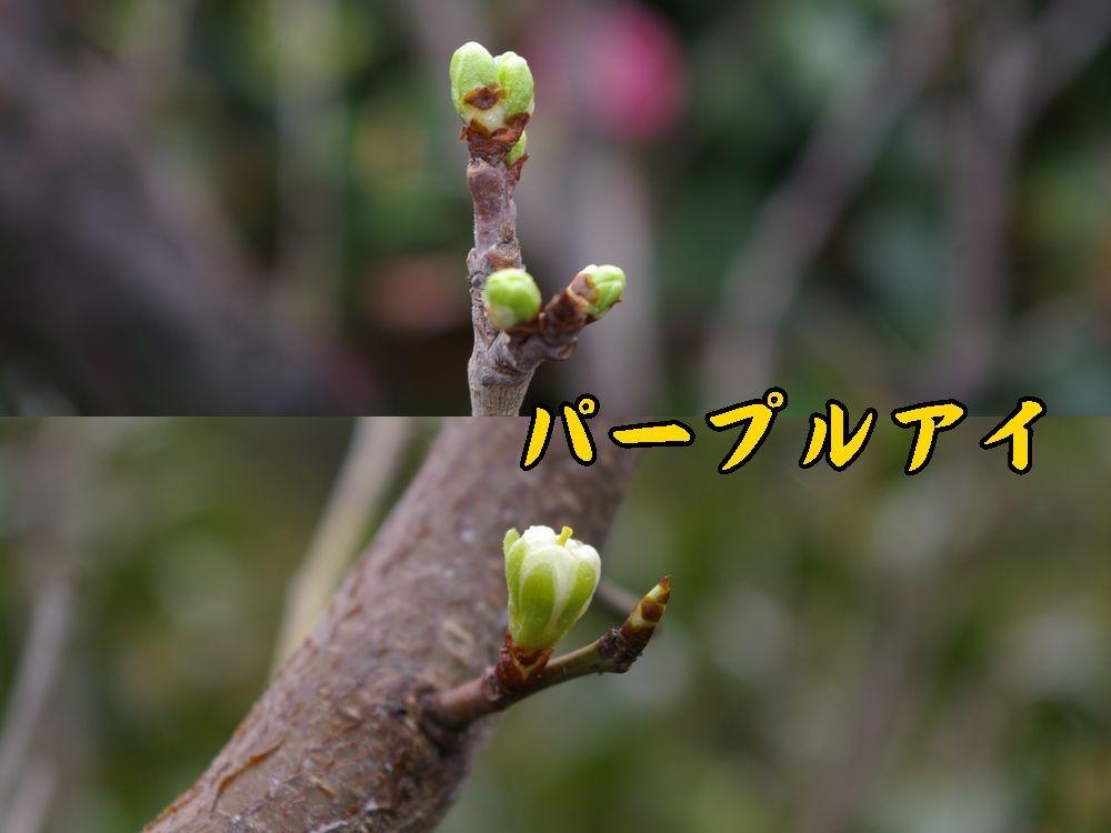 1Pai0403c1.jpg