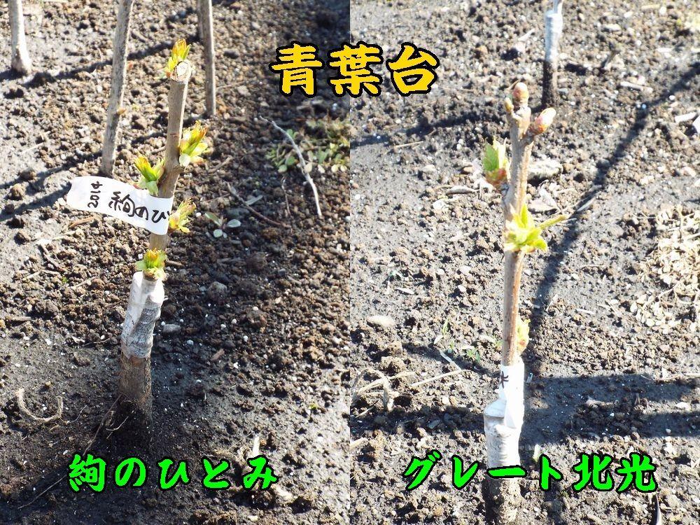 1a_jyuGho405c1.jpg
