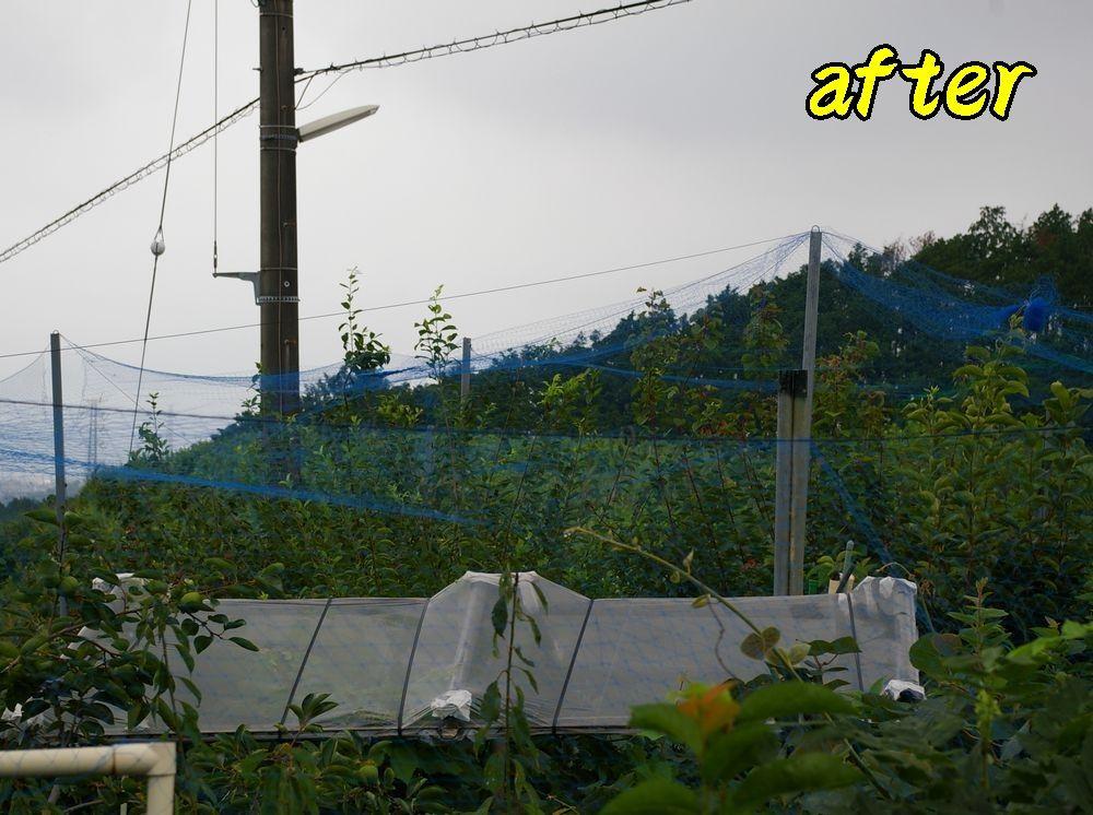 1after0807c1.jpg