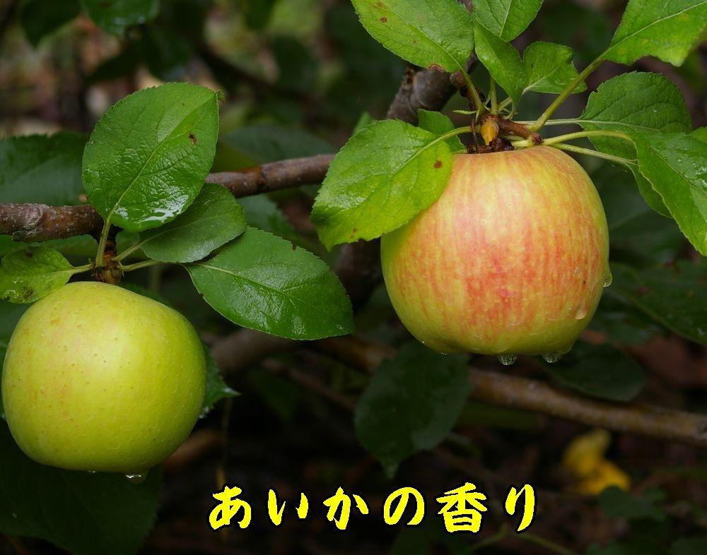 1aikanokaori0901c1.jpg