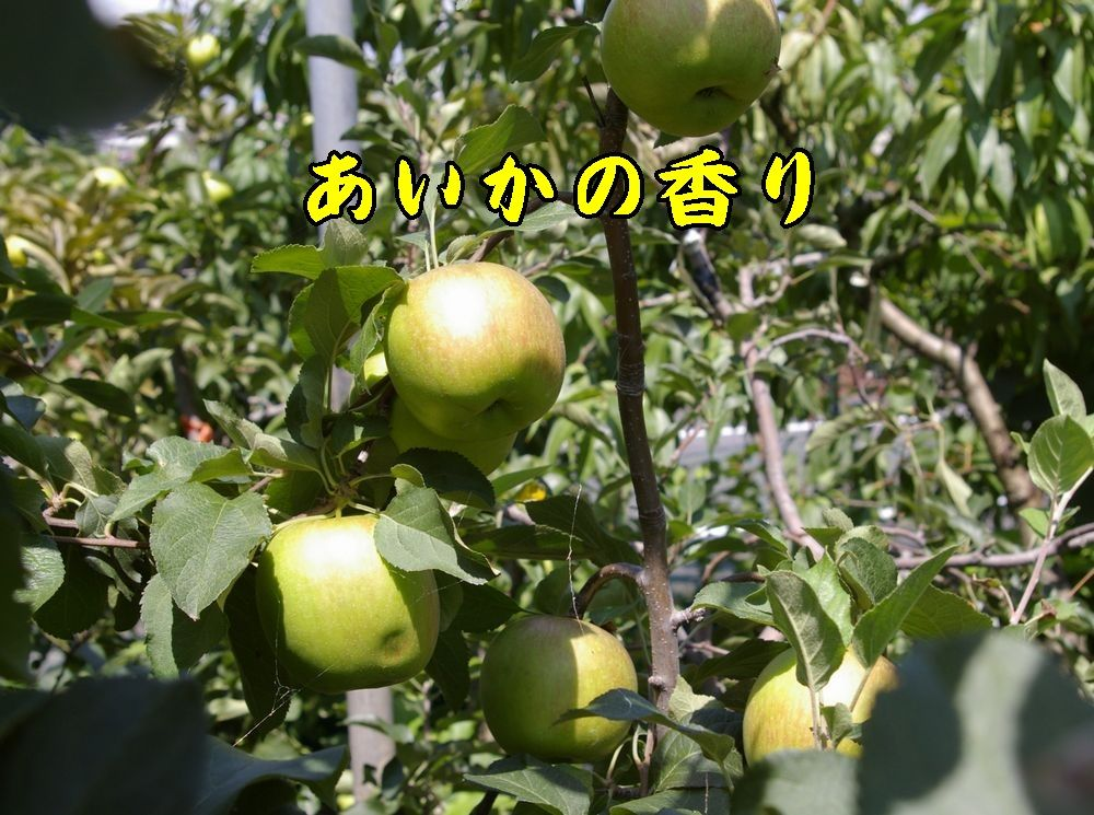 1aikanokaori0903c2.jpg