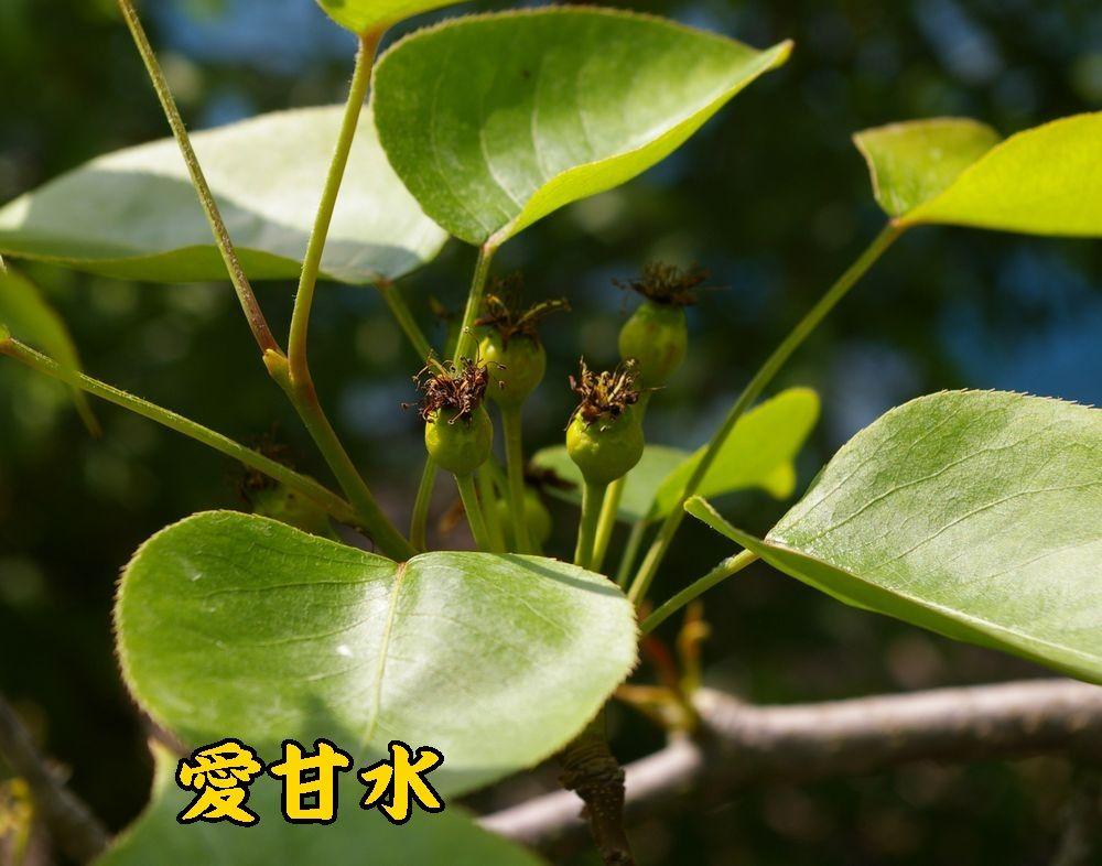 1aikansui0427c1.jpg