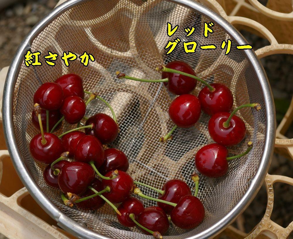 1benis_red0604c1.jpg
