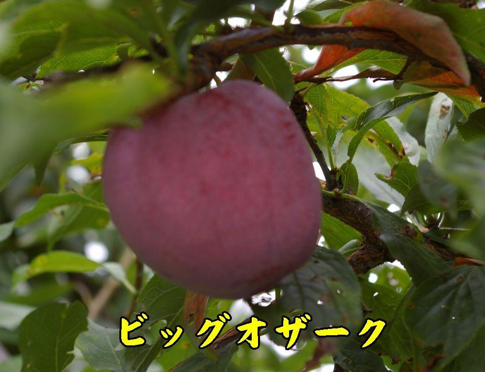 1bigozark0718c1.jpg