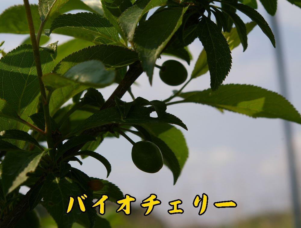 1biochery0426c1.jpg