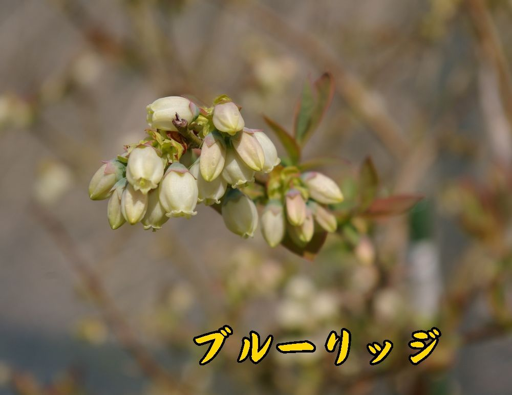 1blueriggi0407c1.jpg