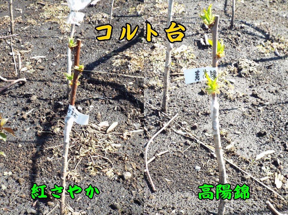 1c_sayaKouyo0405c1.jpg