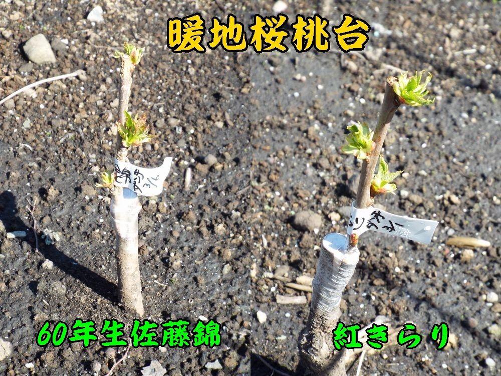 1d_60nekira0405c1.jpg