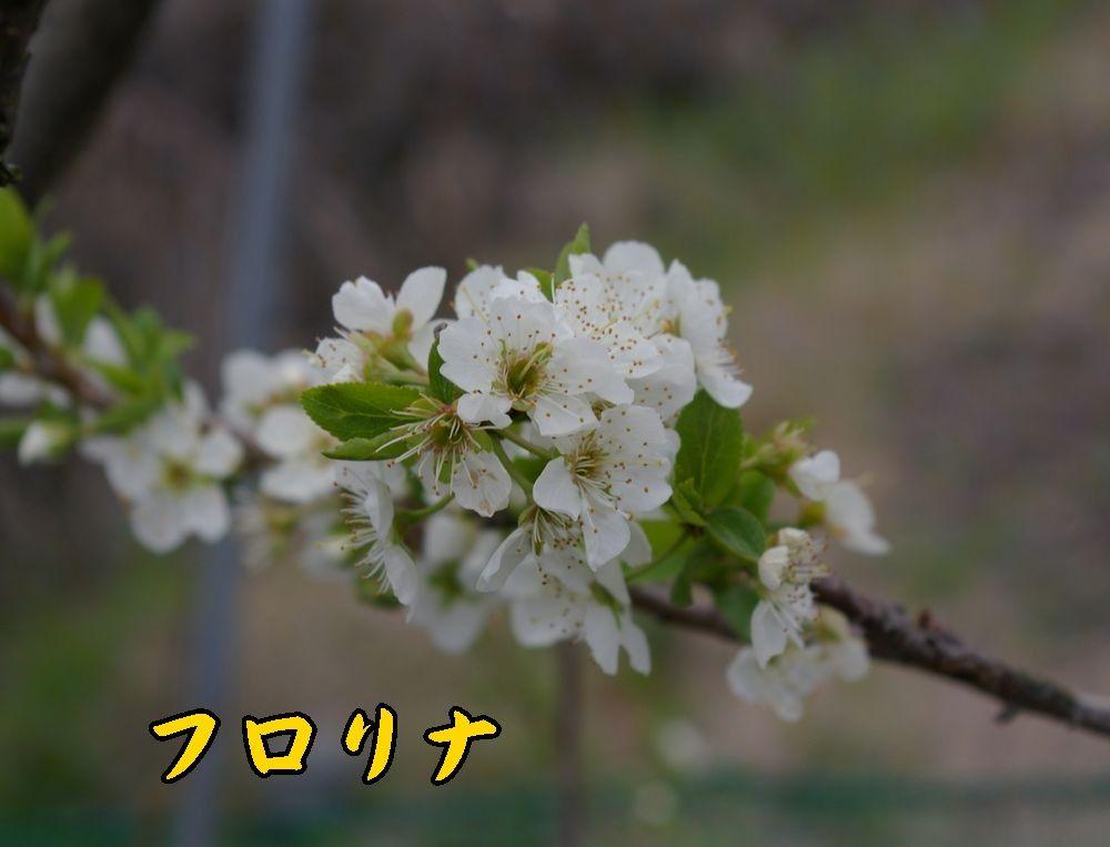 1frorina0402c1.jpg