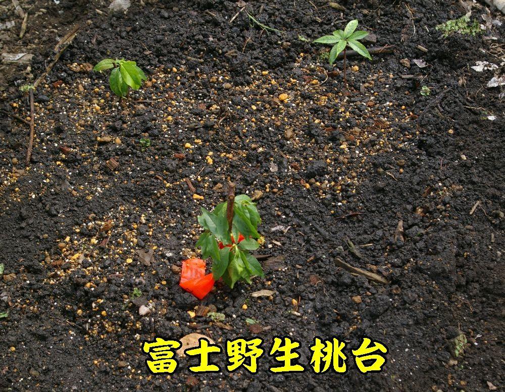 1fujiyasei0617c1.jpg